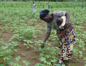 Risultati immagini per agricoltura in burkina faso